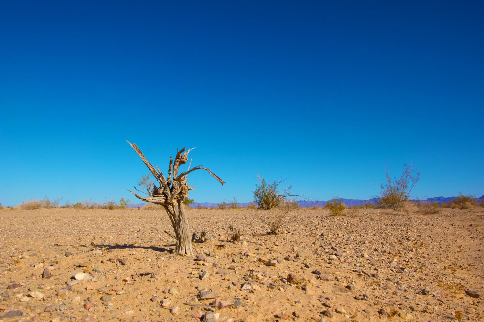 CO2 E CRISI CLIMATICA